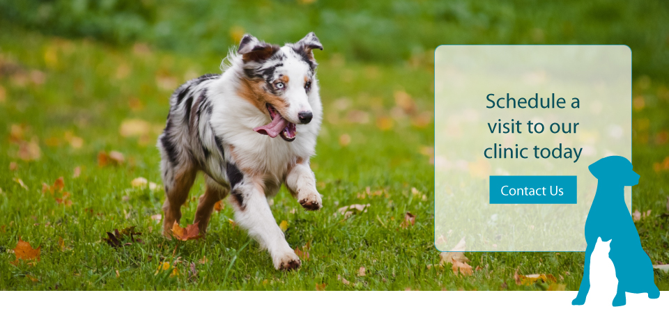 Schedule a visit to our clinic today | Dog running in open grass